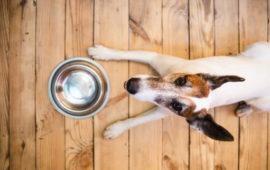 ¿Podría mi perro tener una intolerancia alimentaria?