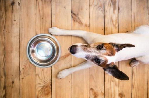 Intolerancias alimentarias en perros