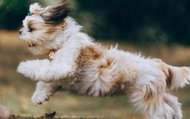 Localizadores de perros ¿de verdad son efectivos?