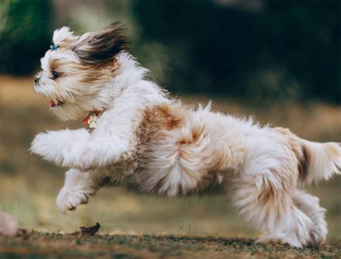 Localizador perro corriendo