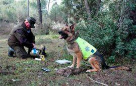 La Junta de Andalucía reactiva una unidad canina para luchar contra los venenos que amenazan la fauna