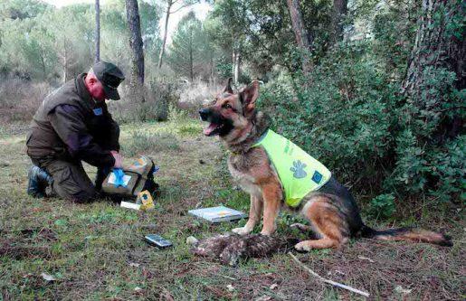 Lucha contra venenos por parte unidad canina