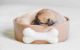 ¿Qué servicios profesionales pueden necesitar nuestras mascotas?