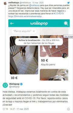 Alquiler de perros Wallapop Melisa Tuya