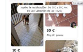 Wallapop en contra del alquiler de perros en su APP
