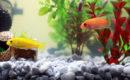 El filtro en el acuario