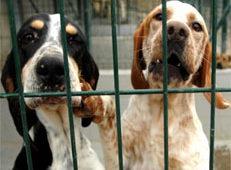 Centros de protección animal colapsados y no alimentación de colonias de gatos en el Retiro