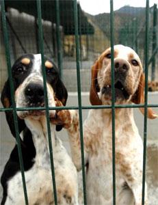 Perreras - Centros de Protección Animal