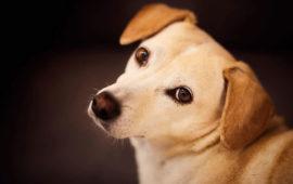 Seguros para mascotas ¿son realmente necesarios?