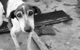 1.500.000 firmas entregadas en el Congreso por un 'Pacto de Estado contra el maltrato animal'