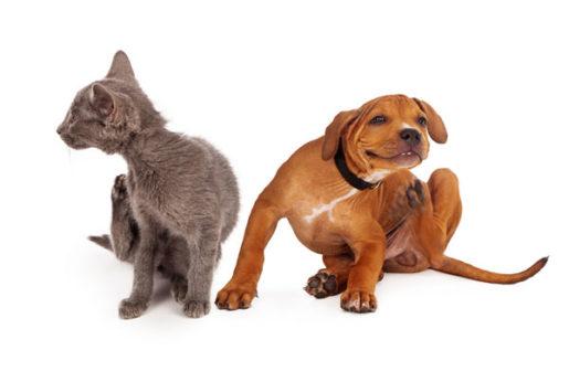 Parásitos externos en perros y gatos