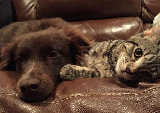 Coronavirus o Covid-19 en perros gatos
