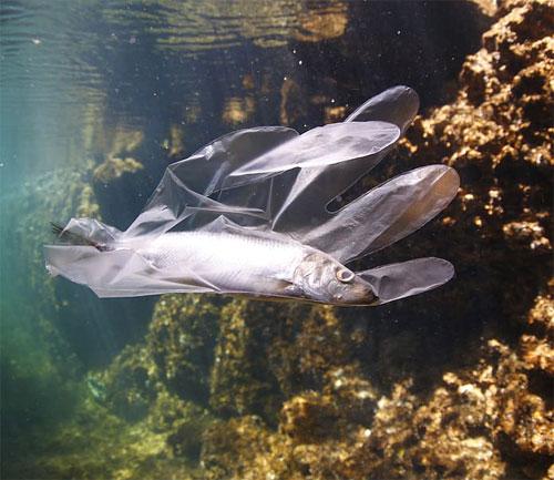 """""""Solo se ha contabilizado el 1 % de todo el plástico que entra al mar"""""""