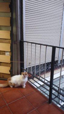 Terraza cerrada gatos