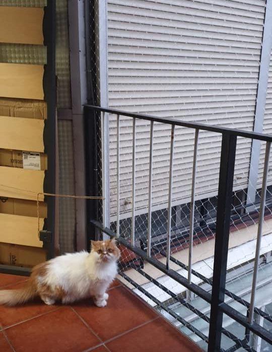 Redes anticaídas gatos. Seguridad profesional para felinos.