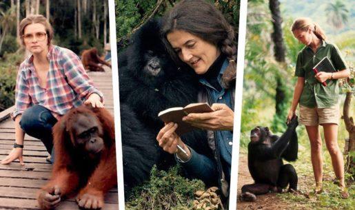 Tres pioneras que miraron de tú a tú a los primates