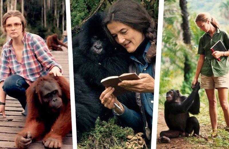 El legado de las tres pioneras que miraron a los primates de tú a tú