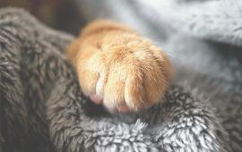 Confirmación de COVID-19 en dos gatos domésticos en Nueva York