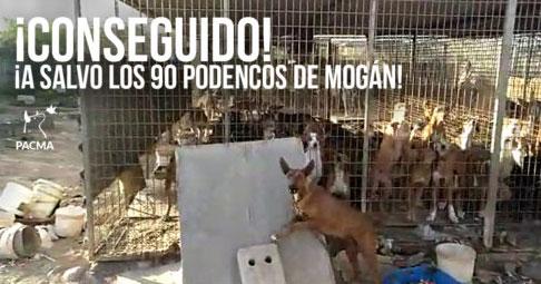 Podencos Mogán
