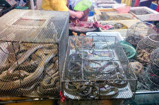 Tráfico ilegal animales salvajes