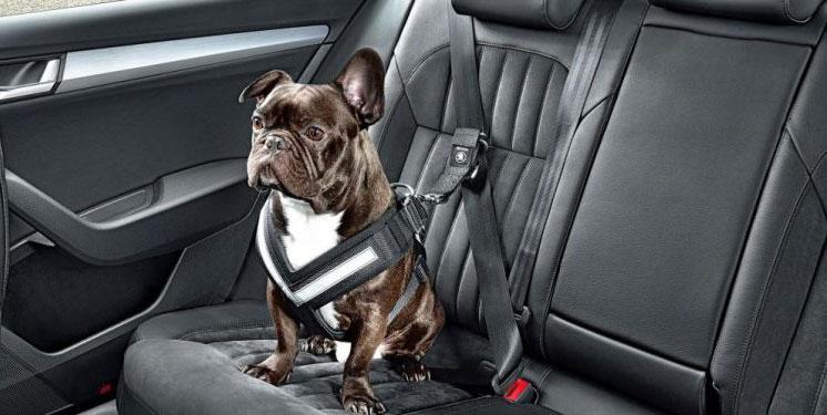 Tecnología para no olvidarse de los pasajeros posteriores de los vehículos