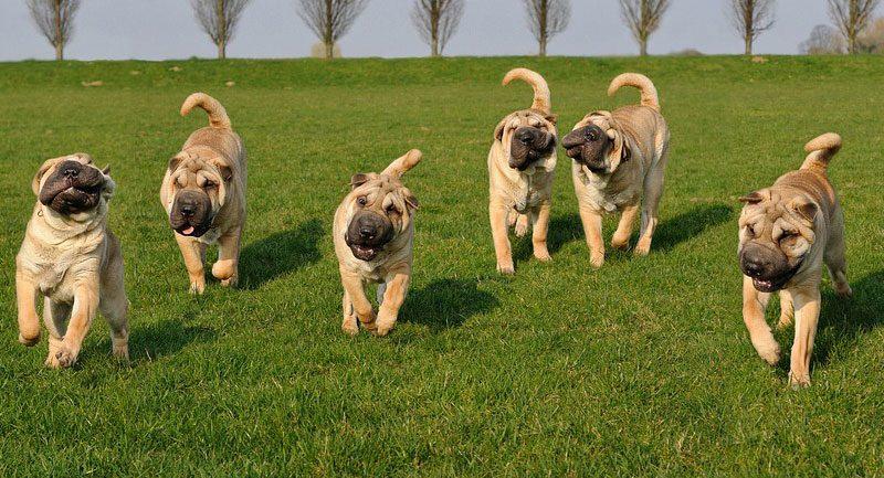 La Exposición Mundial Canina (World Dog Show) Madrid 2020 se pospone hasta el próximo mes de diciembre