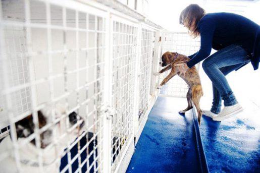 Viajar con perro - Balearia alojamiento perros