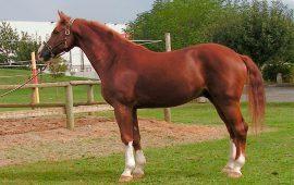 Conservación de la actividad mínima necesaria para el mantenimiento de la salud de los caballos