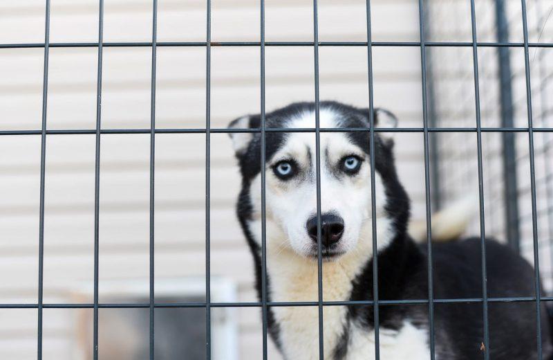 Perros en centro de protección