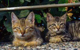 Situación de las colonias felinas tras el estado de alarma