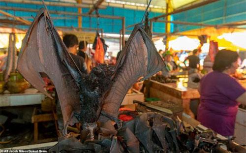Murciélagos en Mercado de Indonesia