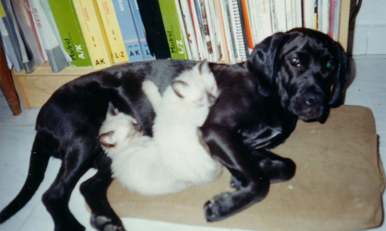 Preparando al perro para el final de la crisis del covid-19 y la vuelta a la vida habitual