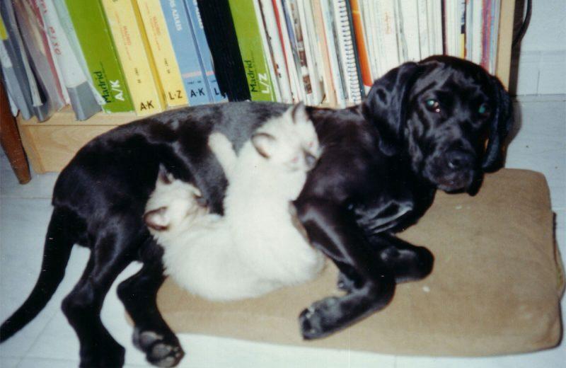 Perro con gato portada