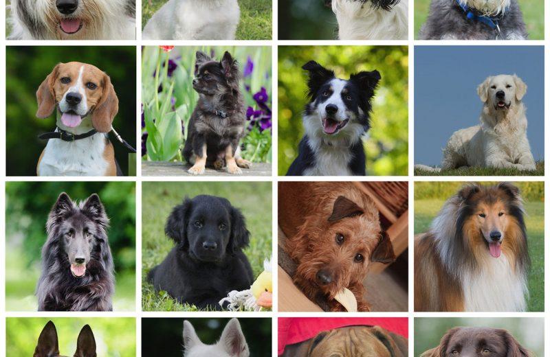 Principales características de los perros según su tamaño