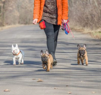 Paseos con los perros