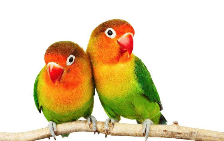 Vivienda, accesorios y complementos para aves