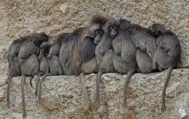 El aislamiento social afecta al bienestar de humanos y de otros mamíferos