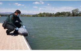 Devolución al medio natural de angulas procedentes del tráfico ilegal