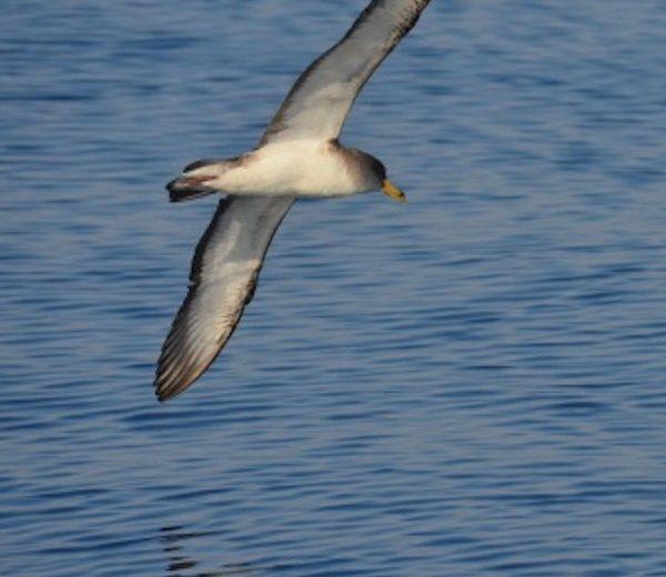 Puede y debe haber un plan contra las capturas accidentales como aves y tortugas en la pesca