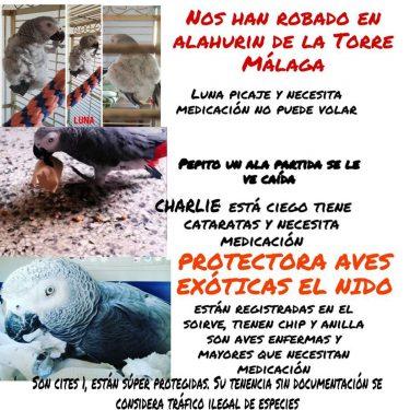 Aves robadas protectora EL NIDO