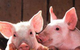 Consulta pública del Real Decreto sobre normas de sanidad y protección animal durante el transporte