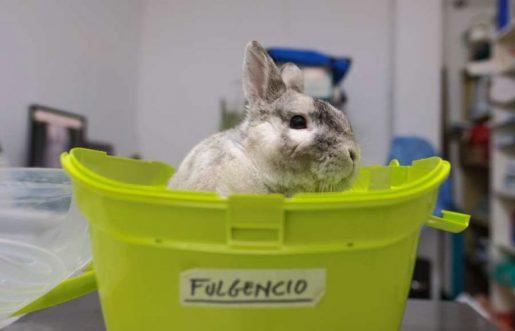 Conejo de visita al veterinario