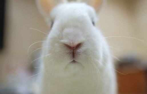 Conejo oliendo
