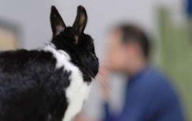 ¿Los conejos reconocen a las personas?