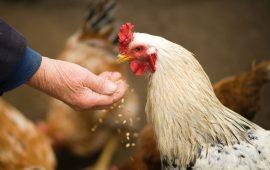 La importancia una buena ventilación en granjas y establos