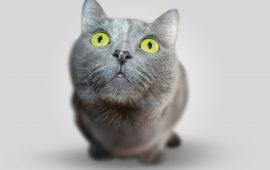 Cinco comportamientos increíbles en los gatos