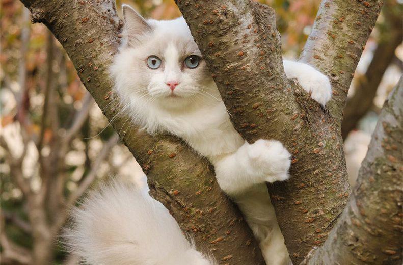 La Organización Colegial Veterinaria Española pide restringir la salida de los gatos domésticos (semilibertad)