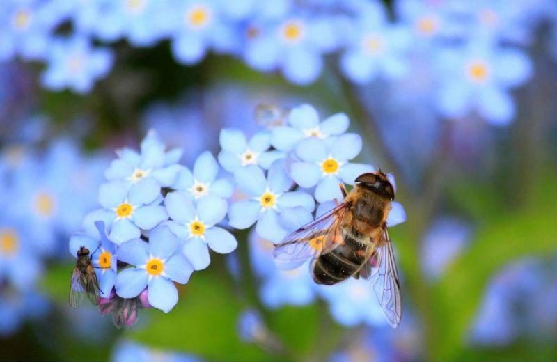 El 'apocalipsis' de los insectos no es tan grave como se creía