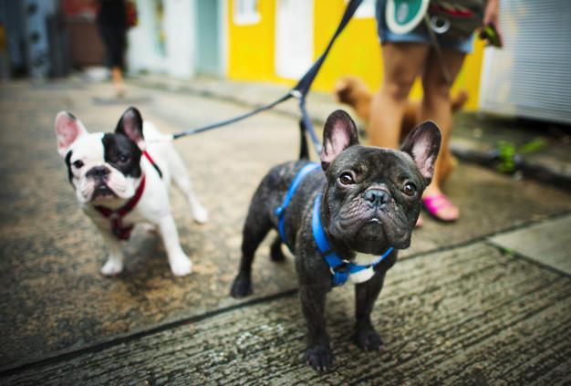 Síntomas de una parálisis laríngea en un perro