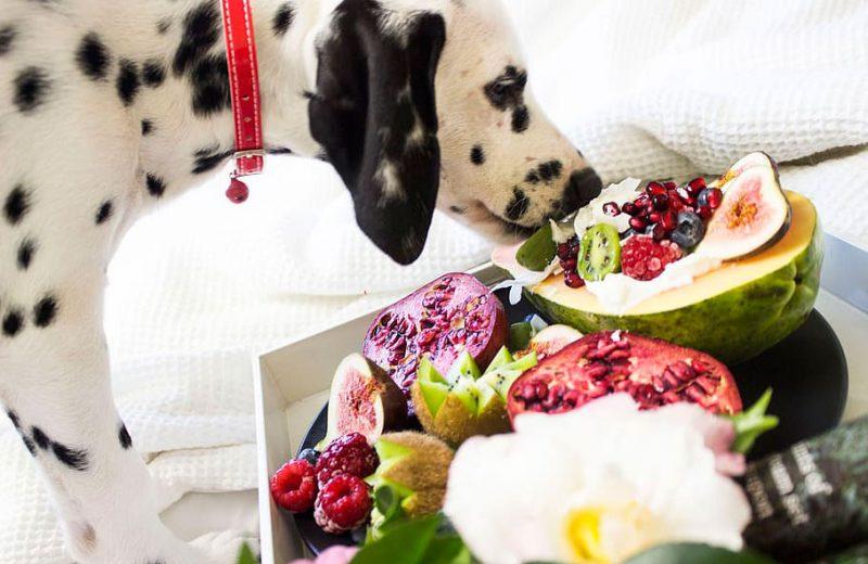 Perro con frutas